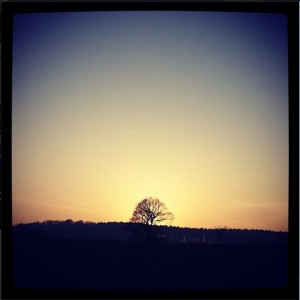 Lonesome Tree by @sammography